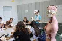 Anatomie-Tutorium von ProMeTa